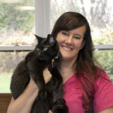 Vet technician holding onto a black cat