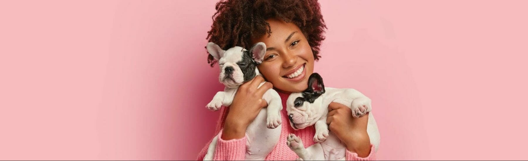 Women holding two pugs with a pink background